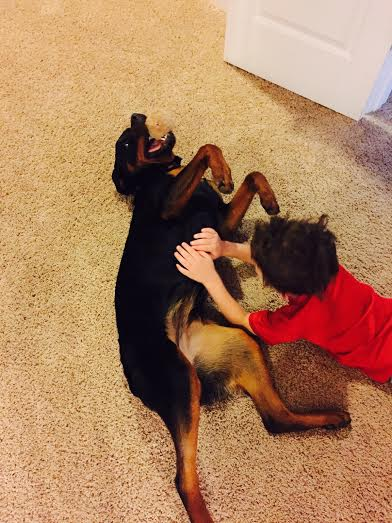 German Rottweiler Puppies For Salegerman Rottweilers Vgrottweilerscom